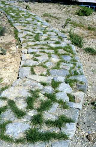 Kyperounta, the garden of the Museum of the Holy Cross. Completed stone path, 1994.