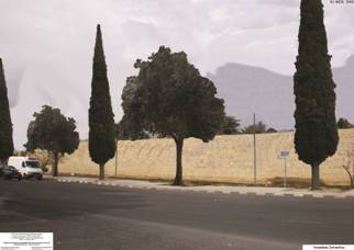 Lefkosia, Salaminos avenue with cypress and olive trees.