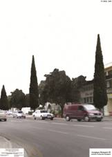Lefkosia,Salaminos avenue with cypress and orange trees.